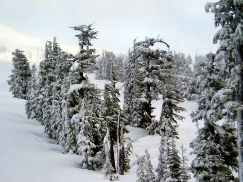 Trees on the mountain